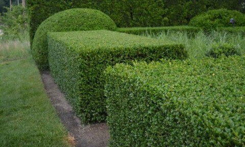 Những mẫu tỉa cây cảnh cho sân vườn đẹp