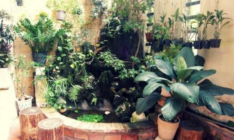 Tiểu cảnh đẹp, xanh tươi trong vườn nhà phố