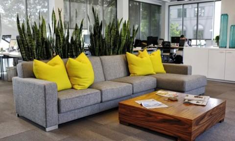 Cách dùng cây xanh để phân chia không gian trong nhà