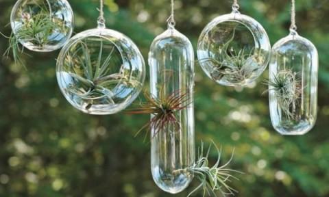 Những chậu cây nhỏ xinh trang trí cho không gian nhà đẹp