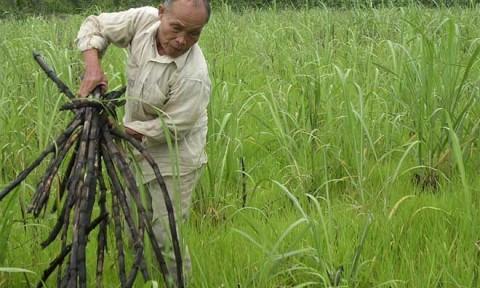 Bất cập từ giấc mơ phát triển công nghiệp: Hoang hóa đất đai, lãng phí trăm bề