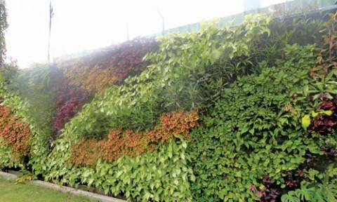 Vườn thẳng đứng – Giải pháp nhận diện thương hiệu