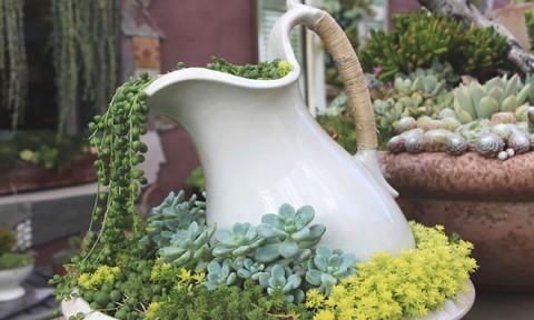 Những suối hoa ấn tượng trong vườn
