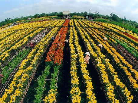 Vùng chuyên canh sản xuất hoa cảnh tại Đa Séc, Đồng Tháp