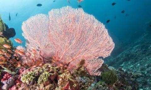 Vật liệu có tính chất giống san hô giúp thu gom kim loại nặng độc