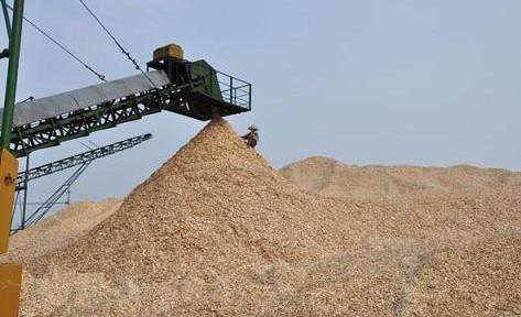Miễn kiểm dịch thực vật đối với dăm gỗ xuất khẩu