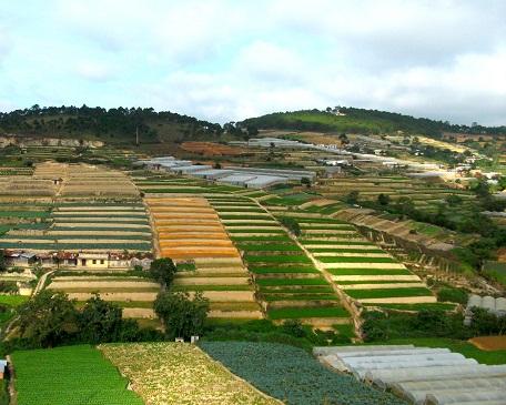Vùng chuyên canh sản xuất rau sạch tại tp Đà Lạt, Lâm Đồng