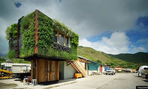 Ngôi nhà bọc trong bức tường xanh lá cây