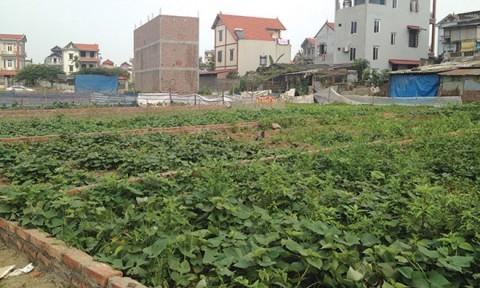 Hà Nội: Sắp đấu giá 252 thửa đất