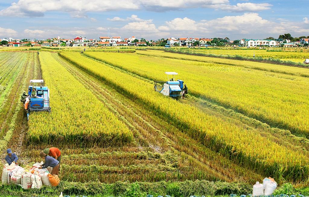 Nông thôn mới Quỳnh Phụ, Thái Bình