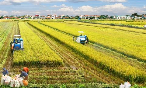 Mô hình định cư nông thôn Việt Nam – Nhận diện – Quy hoạch phát triển bền vững