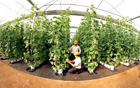 Thành lập Khu Công nghệ cao công nghệ sinh học hơn 200 ha tại Đồng Nai