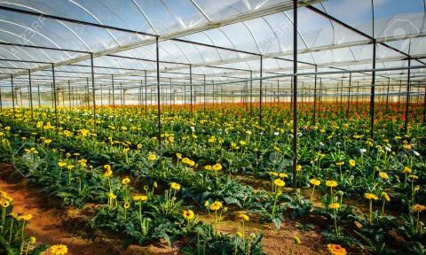 Chiến lược phát triển cho làng đô thị nông nghiệp bền vững