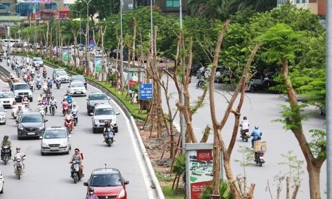 Cây xanh nào phù hợp với đô thị Hà Nội?
