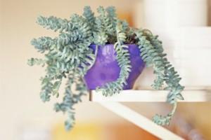 10 cây trồng trong nhà khiến nhiều người không tin có thật