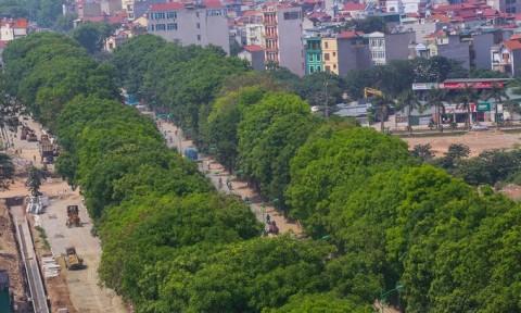 """Hà Nội không cần """"hy sinh"""" 1.300 cây xanh mà đường vẫn mở rộng"""