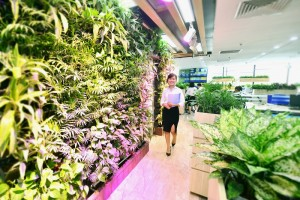 Mô hình văn phòng xanh – lựa chọn mới cho các doanh nghiệp