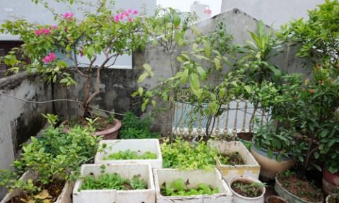 Nhà đẹp 4 tầng thành kho đồng nát vì gia chủ ham tích đồ trồng rau