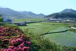 Nông sản mới, nông thôn mới và nền nông nghiệp dễ 'tổn thương'