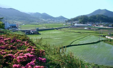 Xây dựng nông thôn mới – kinh nghiệm của một số nước châu Á