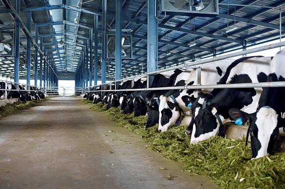 Chăn nuôi theo hình thức công nghệ cao