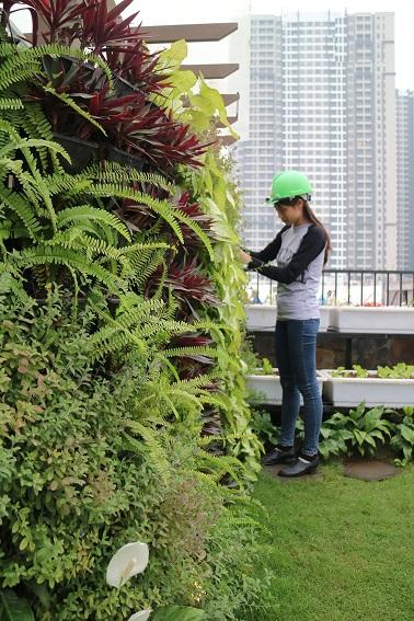 Giải pháp vườn thẳng đứng tiết kiệm diện tích
