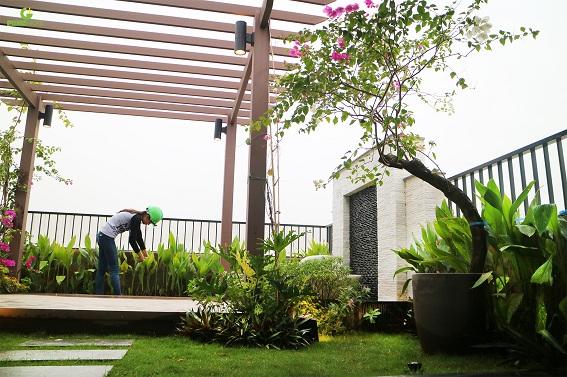 Lựa chọn từng vật liệu và giống cây cho vườn trên mái