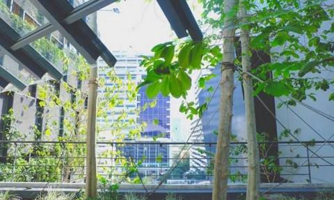 Các thành phố khu vực châu Á – Thái Bình Dương: Chú trọng xây dựng không gian sống xanh