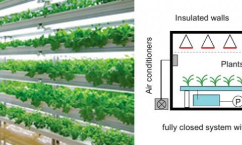 Nhà máy trồng trọt – Mô hình hiệu quả trong phát triển Đô thị và Nông thôn bền vững