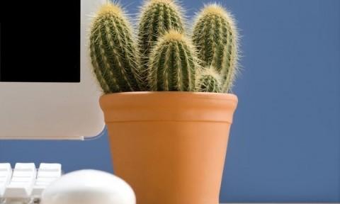 Loạt cây trồng siêu xinh, trồng cả năm vẫn xanh tốt trong văn phòng