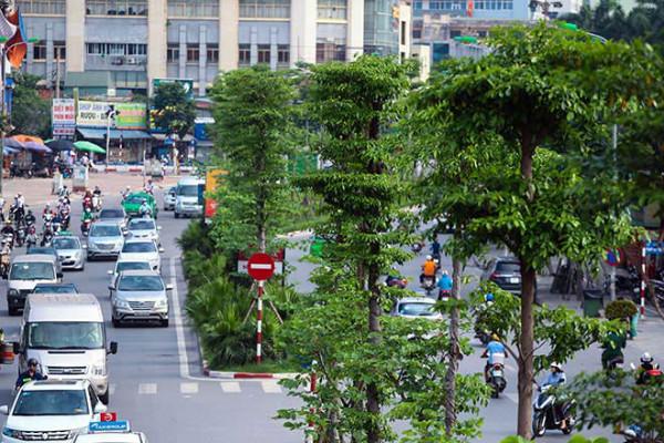 Trong 11 tháng đầu năm 2018, Thành phố Hà Nội đã trồng được hơn 621.400 cây bóng mát các loại. Ảnh minh họa