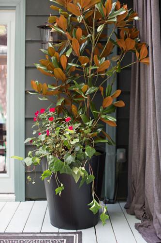 Thêm chậu cây hoa mộc lan: Một chậu cây hoa mộc lan trong chậu là điểm nhấn ở hiên nhà. Hoa mộc lan là biểu tượng tốt đẹp của mùa thu. Một chậu hoa ngoài hiên giúp thanh lọc không khí trong tổ ấm của bạn, cũng giúp hiên nhà thêm xinh xắn và đáng yêu hơn