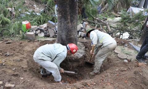 Hà Nội chi hơn 7 triệu đồng để chặt mỗi cây xanh trên đường Láng
