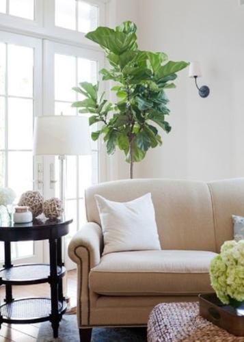 Ghế sofa thường có hai loại lưng tựa là lưng có đệm hoặc lưng gối có thể tháo dời. Tùy vào sở thích và việc dọn vệ sinh bạn hãy cân nhắc loại ghế có lưng tựa phù hợp.