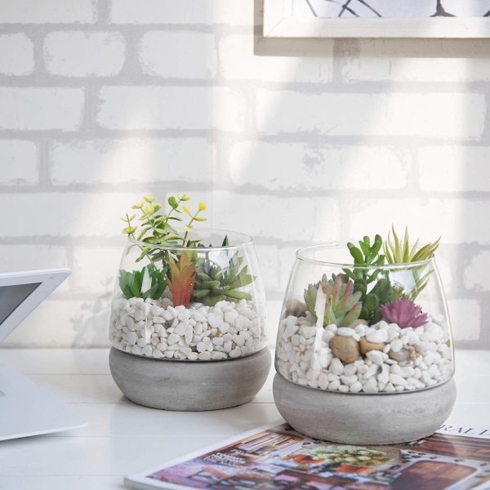Bình thủy tinh có đế bằng bê tông, hoàn hảo để trồng xương rồng hay các loại cây cảnh