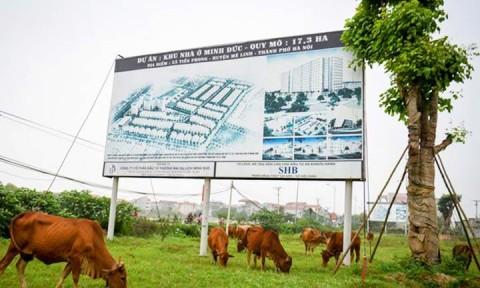 Vấn nạn đầu cơ đất đai rồi để hoang tại Hà Nội: Thuốc nào để 'trị'?
