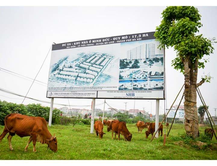 Mê Linh còn nhiều diện tích đất để hoang, trở thành nơi chăn thả gia súc. Ảnh tư liệu internet
