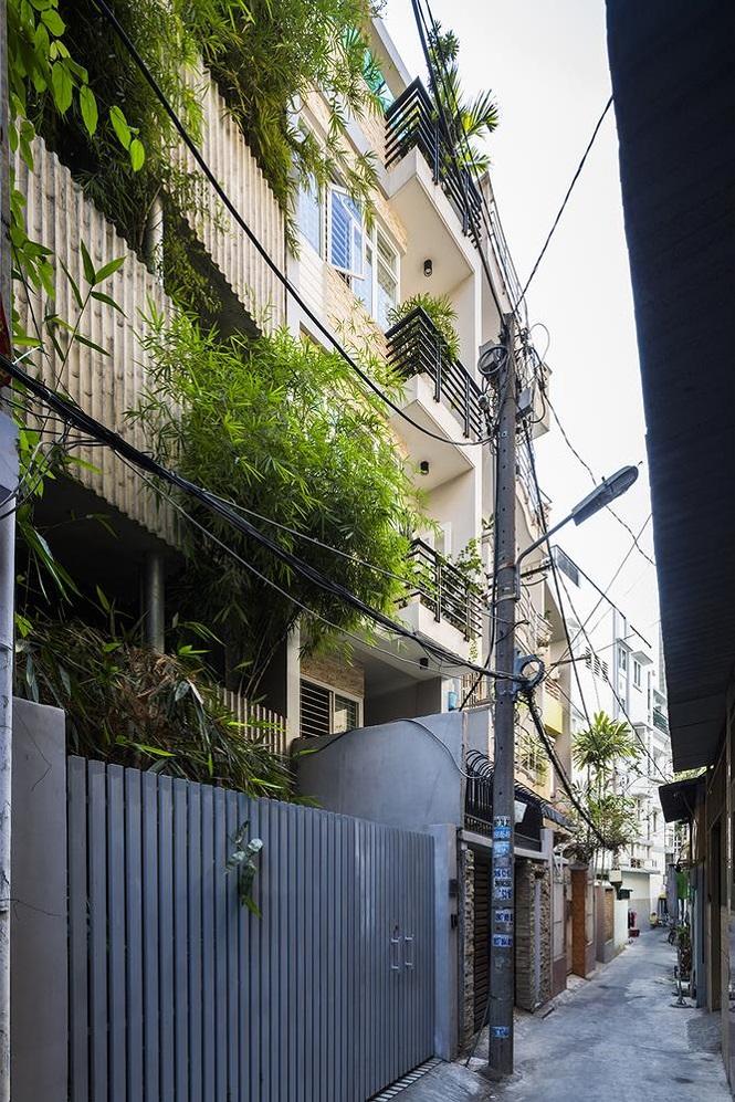 Trong một con hẻm nhỏ từ 2 đến 3m, khu vườn tre khiến chủ nhân cảm giác mình đang sống trong khu rừng giữa thành phố nhộn nhịp.