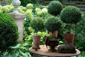 10 cây cảnh mang đến bầu không khí trong lành cho nhà bạn