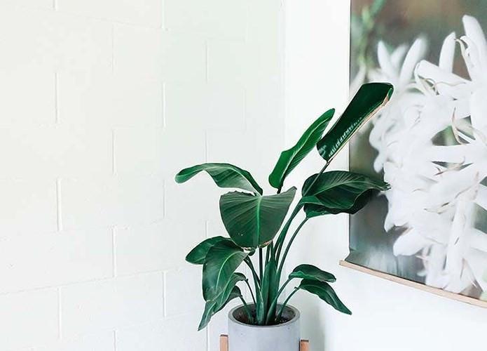 Văn phòng: Hoa thiên điểu. Một nghiên cứu năm 2011 cho thấy trồng loại cây này trong văn phòng có thể ngăn ngừa mệt mỏi và cải thiện sự tập trung.