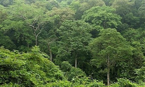 Hà Nội yêu cầu rà soát toàn bộ hiện trạng rừng, đất lâm nghiệp