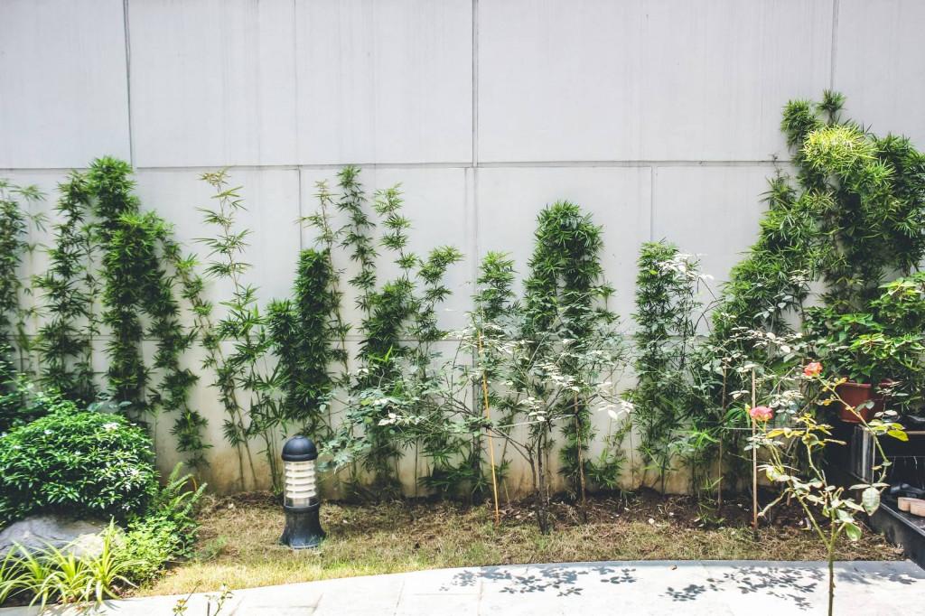 Hệ thống đèn vườn được bố trí xen kẽ với các khóm cây xanh