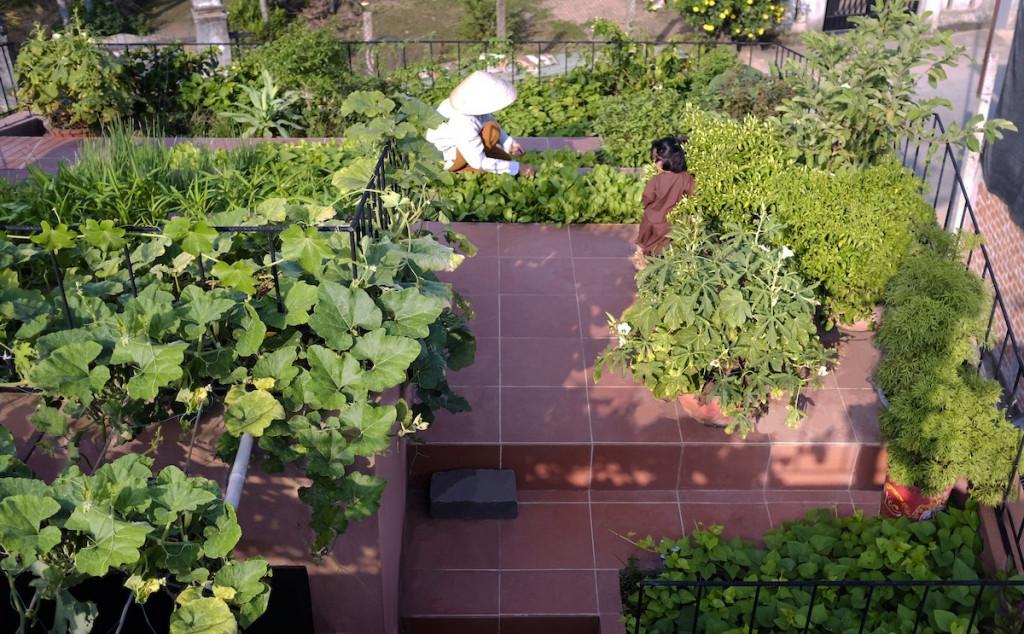 Rau sạch thu hoạch từ khu vườn không chỉ đủ cho gia chủ ăn mỗi ngày mà còn dành biếu hàng xóm và tích trữ những đợt mưa bão. Đây cũng là nơi quây quần khi con cháu, bạn bè tới chơi.