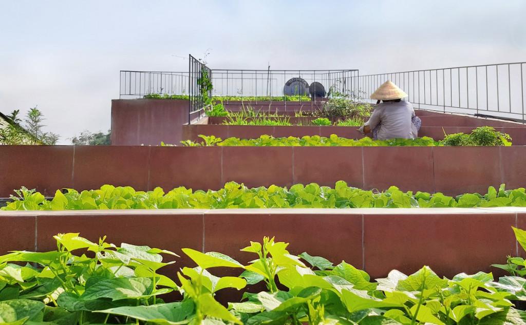 Khu vườn trở thành một phần trong cuộc sống thường nhật của vợ chồng gia chủ. Mỗi sáng, họ dậy từ 5h sáng, bắt sâu nhổ cỏ rồi hái rau nấu cơm sáng, sau đó làm việc, chồng sửa xe còn vợ ra đồng. Chiều muộn, họ lại lên mái nhà chăm vườn, hái rau chuẩn bị bữa tối.