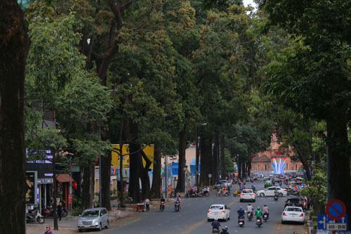 TP HCM cần nhiều hơn những con đường phủ kín sắc xanh như thế này. Trong ảnh: Đường Phạm Ngọc Thạch, quận 1, TP HCM Ảnh: HOÀNG TRIỀU