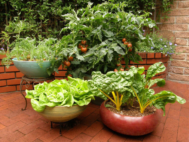 Sử dụng những chiếc chậu trồng độc đáo từ việc tái chế hoặc mua vài chậu khác thường là ý tưởng cực hay cho khu vườn rau của bạn sống động.