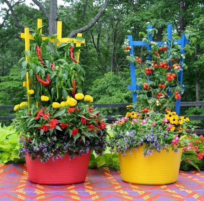 Bạn có thể làm sáng khu vườn rau của bạn bằng cách chọn các thùng chứa đầy màu sắc để trồng các loại rau và thảo mộc yêu thích.