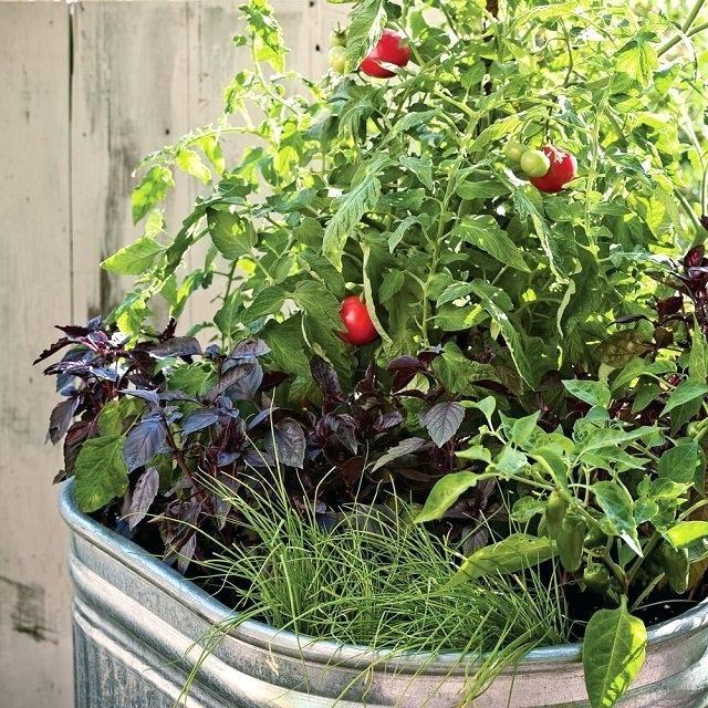 Ý tưởng trồng rau bắt đầu từ chậu siêu hoàn hảo nếu bạn không có không gian để thiết lập một khu vườn đúng nghĩa. Đối với những người có một ban công nhỏ hoặc cửa sổ mở nhận được ánh nắng mặt trời đầy đủ, đây là ý tưởng không tồi chút nào.