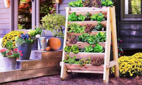 Những ý tưởng cùng mẹo thiết kế vườn rau siêu tuyệt vời giúp không gian nhỏ hẹp cũng thành đáng mơ ước