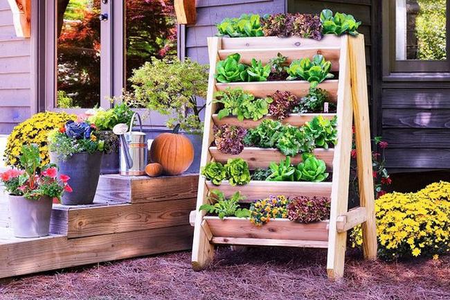 Bạn có thể trồng các loại thảo mộc và rau xanh tươi dễ dàng trong một không gian hạn chế bằng cách làm theo ý tưởng này.